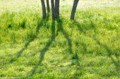 Le Printemps en Luberon © Francis Manguy